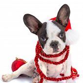 image of french bulldog puppy  - French bulldog puppy in santa hat  with present boxes over white - JPG