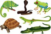 pic of alligators  - reptiles and amphibians photo realistic vector set - JPG