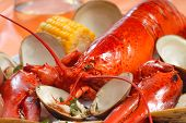 stock photo of crustaceans  - Delicious boiled lobster dinner with clams - JPG