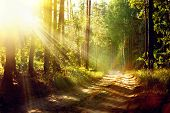 stock photo of sunrise  - Magical Autumn Forest - JPG