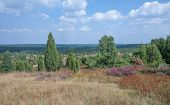Wilseder Berg,Lueneburg Heath,Germany