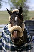 Horse Accessories poster