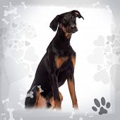 Doberman Pinscher puppy sitting, 6 months old, on a designed background
