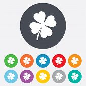 stock photo of clover  - Clover with four leaves sign icon - JPG
