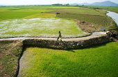 Farmer Pump Water To Paddy Field