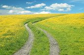 stock photo of buttercup  - Curved way in a buttercup meadow against blue sky with clouds summer landscape - JPG