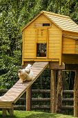 stock photo of hen house  - Chicken walking out from the hen house on the ramp - JPG