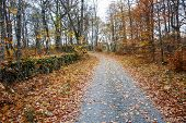 stock photo of stonewalled  - An old country road along a stonewall at autumn in the Swedish province Smaland - JPG