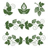 picture of hop-plant  - stylized hop  borders and design elements - JPG