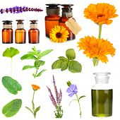 image of mixture  - Collage of medicine bottle and herbs - JPG