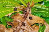 stock photo of bat wings  - Small bats hanging in tree in Thailand - JPG
