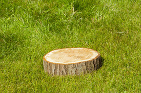 foto of disafforestation  - tree stump on the green grass - JPG