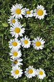 picture of alphabet letters  - letters of daisies on the green grass background - JPG