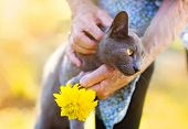 foto of apron  - Senior woman in apron with her gray cat and yellow flower outside her house - JPG
