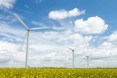 image of rape-seed  - Group Of Wind Turbines In Field Of Oil Seed Rape - JPG