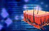 foto of fat cell  - Digital illustration of Skin in colour background - JPG
