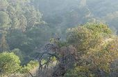 pic of hazy  - Looking down onto a hazy forest - JPG