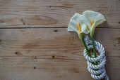 pic of calla  - Beautiful white Calla lily over rope and wooden table - JPG