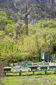 foto of beehive  - Apiary with bee beehives on the of mountain - JPG