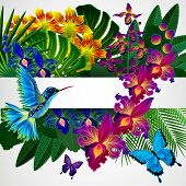 pic of colibri  - Floral design background - JPG