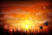 stock photo of dragonflies  - silhouette of dragonfly with sunset - JPG