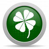 pic of four leaf clover  - four - JPG