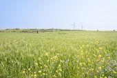 image of generator  - Landscape of green barley field and yellow canola flowers with wind generator in Gapado Island of Jeju Island Korea - JPG