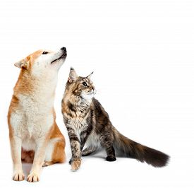 image of coon dog  - Cat and dog - JPG