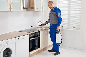 picture of pesticide  - Young Male Pest Control Worker Spraying Pesticide On Induction Hob In Kitchen - JPG